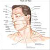 Netter Interactive Atlas of Human Anatomy v3.0