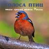 Голоса птиц средней полосы России